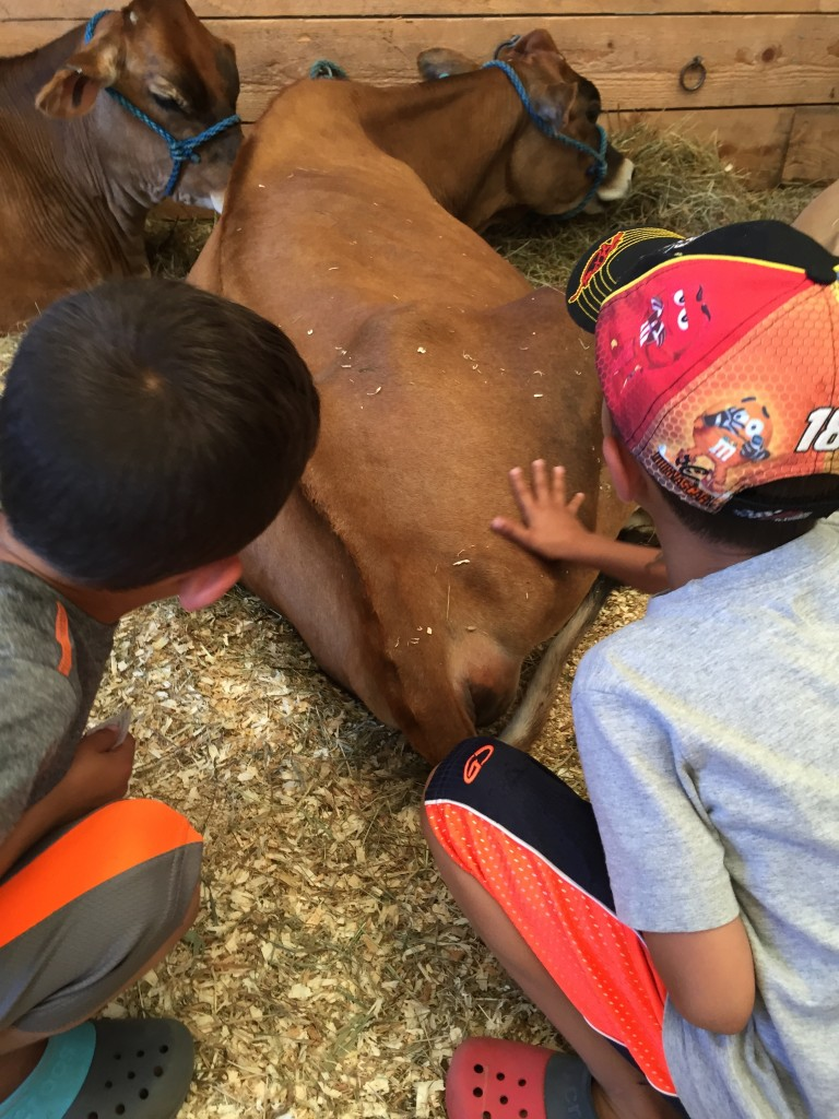 You know fall is here when your kids are petting cows. I'm sure this had nothing to do with them getting sick.